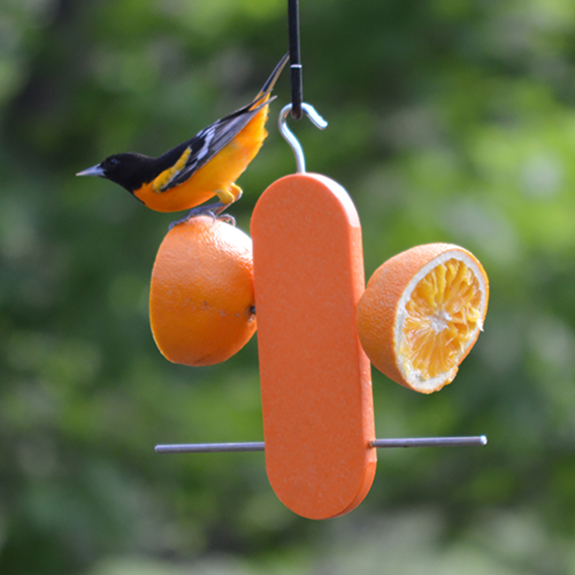 The Backyard Naturalist offers many options for feeding oranges to your backyard birds, including this inexpensive, simple Poly Double Orange Feeder.