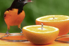 Recycled Oriole Fruit and Jelly Feeders