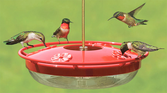 A group of Ruby-throated Hummingbirds gather at a Hummzinger Highview nectar feeder available from The Backyard Naturalist.