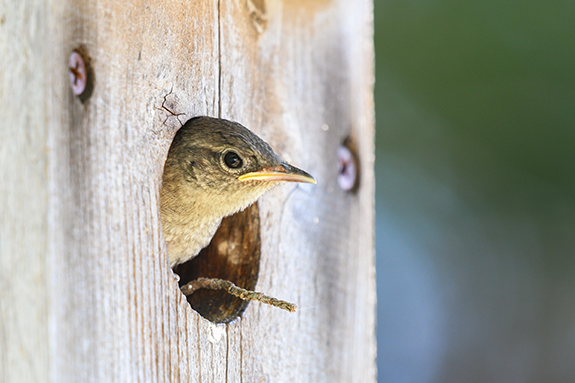 Birds In Your Backyard shelter: one of three simple elements that make your backyard a bird