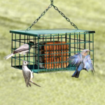 The Backyard Naturalist store has The Suet Palace Feeder in stock. Keep Grackles and Starlings out, but allows Woodpeckers to enjoy your suet!