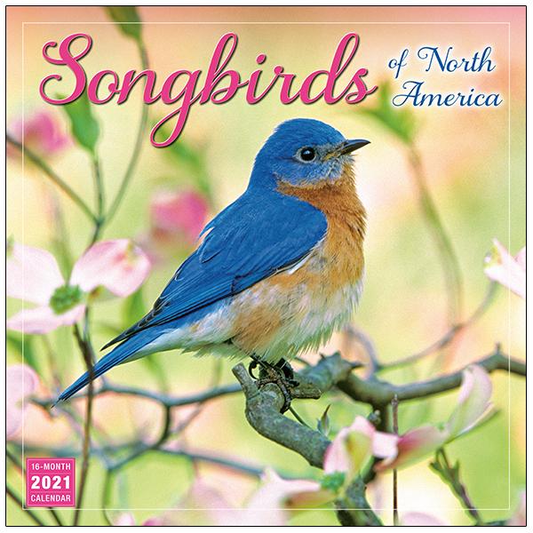 The Backyard Naturalist has the Songbirds of North America Wall Calendar 2021