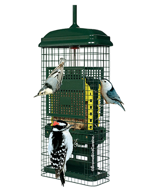 The Backyard Naturalist has Brome Bird Care's Squirrel Buster Suet Feeder in stock.