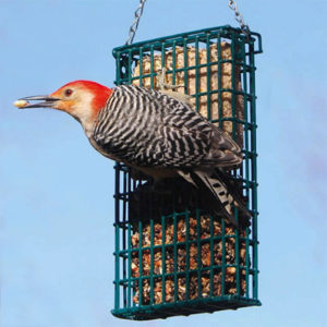 Droll Yankee Double Suet Feeder attracts male Red-bellied Woodpecker - In stock at The Backyard Naturalist in Olney, MD