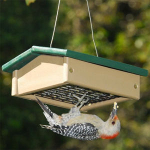 Provide best quality suet cake in an upside-down suet feeder to attract & support your backyard Woodpeckers.
