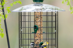 Droll Yankees Domed Cage Feeders