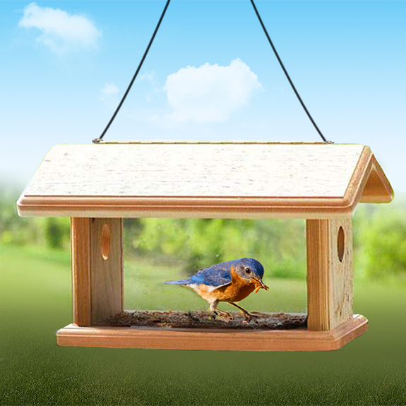 The Backyard Naturalist loves Bluebirds! That's why we stock a selection of feeders especially for Eastern Bluebirds, like this Mealworm Feeder in Cedar.