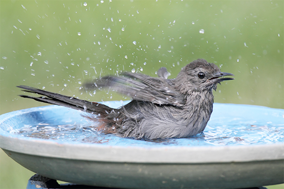 The Backyard Naturalist will help you determine the best water source for your backyard bird habitat.