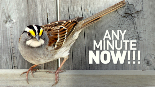 Backyard Birders Guide To Fall Migration The Backyard Naturalist