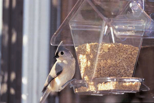 The Backyard Naturalist has Aspect's Window Cafe Hopper Feeder in stock.