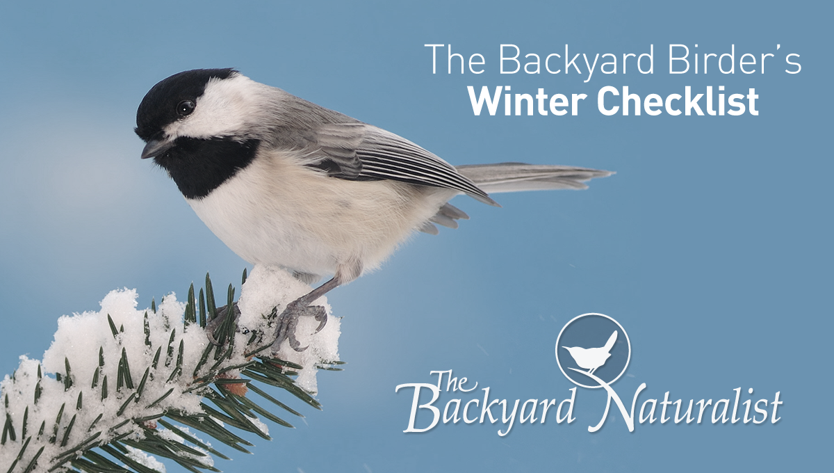 Support Wild Birds Winter 2021! The Backyard Naturalist's Winter 2021 Checklist for Backyard Birding: Focus on the Fundamentals and provide best quality.