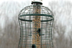 Caged Mixed Seed Tube Feeder