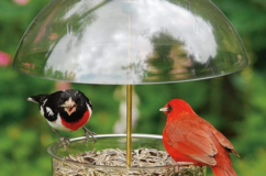 X-1 Seed Saver Feeder with Adjustable Dome