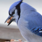 Why Quality Bird Seed Matters- Wild birds must maximize nutrition