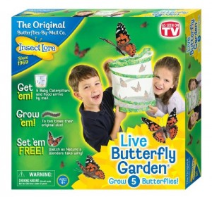 The Backyard Naturalist invites you to witness the magic of caterpillar metamorphosis with a unique hands-on live butterfly experience