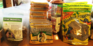 The Backyard Naturalist Mealworms