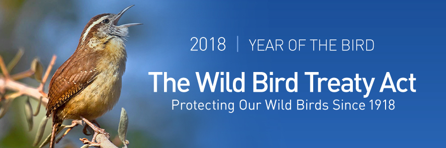 2018 is offically 'Year of the Bird' as The Backyard Naturalist celebrate 100 years of the Wild Bird Treaty Act.