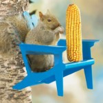squirrel-in-chair-feeder