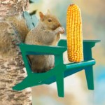The Backyard Naturalist Adirondack Chair Squirrel Feeder